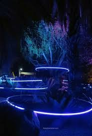 Phoenix Zoo Christmas Lights by The 25 Best Zoo Lights Ideas On Pinterest