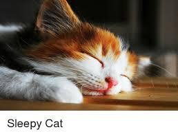 Sleepy Cat Meme - sleepy cat cat meme on me me
