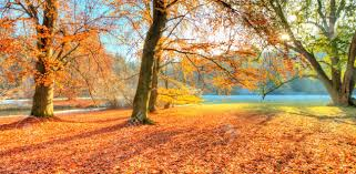 beautiful colored trees in autumn landscape photography snow