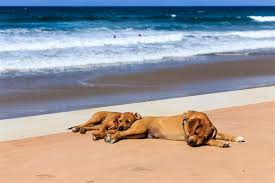 Which State Has The Most Dog Owners Per Capita According To 2016 Stats Travelling With Pets Taking Your Cat Or Dog On Holiday To Spain