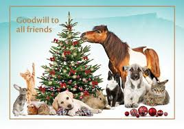animal charities christmas cards christmas lights card and decore