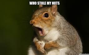 Squirrel Nuts Meme - image jpg