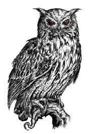 devil owl idea add color owls pinterest