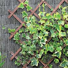Metal Garden Trellis Uk Garden Trellis Webbs Direct Garden Centre