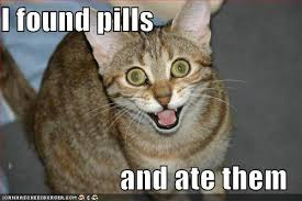 Crazy Cat Meme - colorado homeowners association law blog crazy cat lady or loving