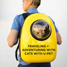 Colorado Traveling With Cats images Adventuring and traveling with cats with u pet jpg