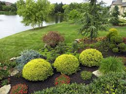 preserved cypress topiary trees landscape traditional with lake