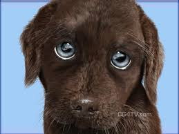 Puppy Eyes Meme - puppy dog eyes blank template imgflip