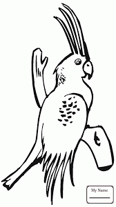 cockatoos birds cockatoo parrot coloring pages kids