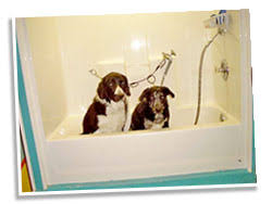 Bathtubs For Dogs Shear Pawfection U2022 Pet Spa U0026 Groomer In Valley Junction West Des