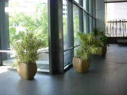 floor plant three plants for cleaner air in your office foliage design