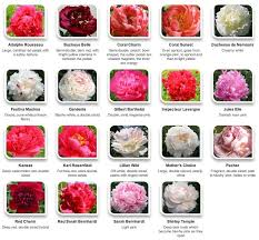 best 25 flower names ideas on wedding flower
