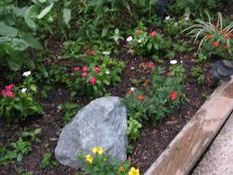 backyard gardens and backyard captivating small tropical backyard
