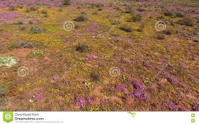 South African Wild Flowers - aerial view of wild flowers south africa stock video video
