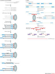 enriching dna libraries for ancient inserts reconstructing