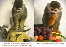Human Color Blindness Gene Therapy Gives Full Colour Vision To Colour Blind Monkeys