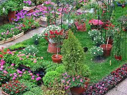 balkon und terrassenpflanzen balkon und terrassenpflanzen