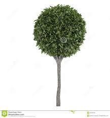 topiary trees topiary trees stock illustration image of shrub 36408540