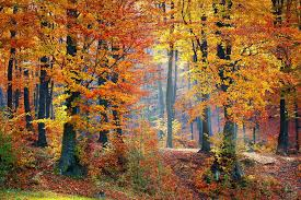 Autumn Colors What To Expect From Fall Foliage This Year How Weather Affects