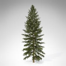 douglas fir tree 3d xfrogplants douglas fir cgtrader