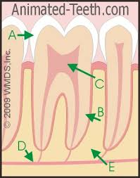 dental quizzes online student activities u0026 classroom lessons all