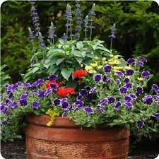 462 best container planting images on pinterest gardening