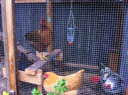 types of backyard chickens chicken coop designs of all types