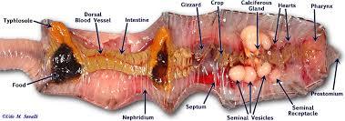 snc2d cells tissues organs