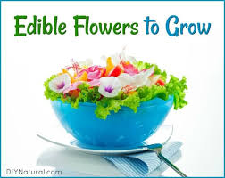 edible images edible flowers grow this list of flowers that are beautiful and edible