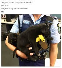Meme Team - sydney police department hired a meme team for their facebook page