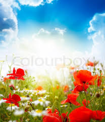 Flower Image Buy Stock Photos Of Flowers Colourbox