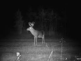 wildgame innovations lights out amazon com wildgame innovations crush 20 lightsout game camera