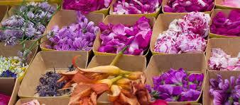 cuisiner les fleurs des fleurs dans nos assiettes
