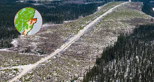 Russian Boreal Forest Disturbance Maps by Greenpeace Clearcutting Free Speech