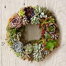 succulent wreath mixed succulent wreath williams sonoma