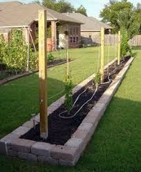 Backyard Grape Vineyards Gris Vines Make A Backyard Vineyard - Backyard vineyard design