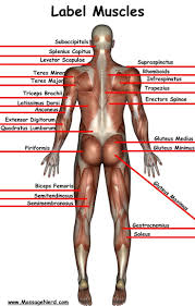 Human Anatomy And Physiology Videos 498 Best Human Body Images On Pinterest Life Science Science