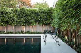 clumping bamboo around pool without a doubt house planning