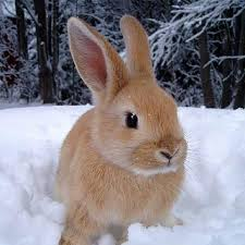 rabbit bunny adopt a bunny rabbit home
