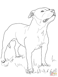 staffordshire bull terrier coloring page free printable coloring