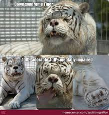 Funny Down Syndrome Memes - down syndrome tiger funny meme picture