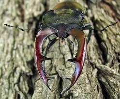 imagenes variadas en 3d imagenes de insectos en 3d y variadas cosas imágenes taringa