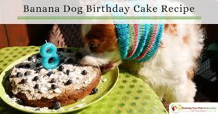dog birthday cake dog birthday cake recipes dog friendly banana puppy cake recipe