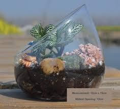 angled terrarium bowl
