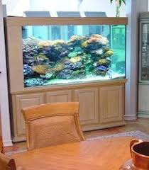 Aquarium Room Divider Aquariums U2013 Das Aquariums