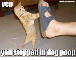 Dog Poop Meme - cataddictsanony mouse yep you stepped in dog poop meme on me me