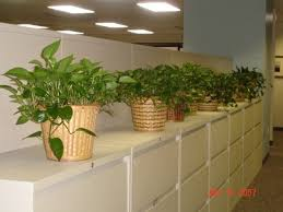Plants For Office Indoor Office Plants Indoor Plants For Office Philadelphia