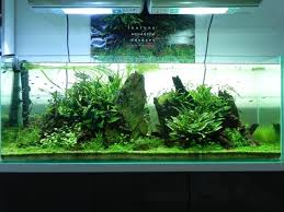cb600 planted tank 120l the life aquatic pinterest plants