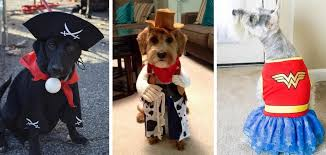 Doggy Halloween Costumes Dog Halloween Costumes Safe Trupanion