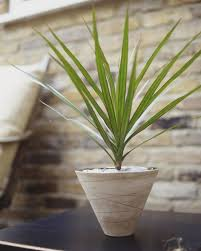 8 Houseplants That Can Survive by 10 Houseplants That Can Survive In Even The Darkest Corner